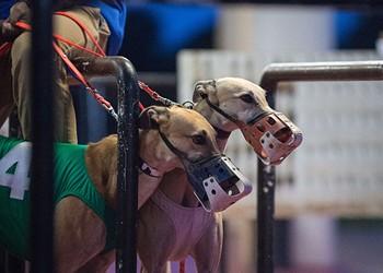 Florida has decided to ban greyhound racing