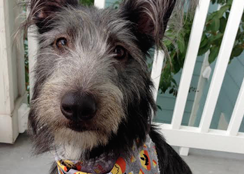 Meet Cinna, our Puppy Love cover-model contest runner-up