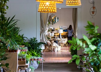Raising houseplants in Orlando isn't always easy, but our little green friends are worth it
