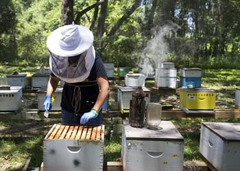 University of Florida opens online version of Master Beekeeper apprenticeship program