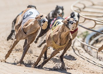 A Florida lawmaker is trying to completely ban greyhound racing in Florida