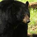 A Florida man was mauled in the face by a bear while letting his dog out