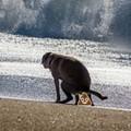 Cocoa Beach, Orlando's closest beach, might start allowing dogs