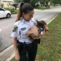 Florida sheriff deputies rescued a puppy stuck in a storm drain and named it 'Poncho'