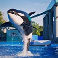 Here's how SeaWorld can stay above water