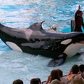 SeaWorld could face punishment from the SEC, company discloses