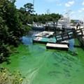 Erin Brockovich to Florida officials overseeing algae crisis: 'You cowards'