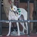Florida seeks to keep greyhound racing ban on ballot