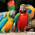 Avian aficionados flock together at Central Florida Fairgrounds for an Exotic Bird Expo