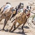 Florida Supreme Court weighs ballot amendment that bans greyhound racing