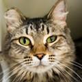 Gimme Shelter: Meet Sophie!