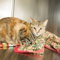 Gimme Shelter: Meet Tinker Bell!