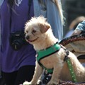Every 'very good boy' we saw at Orlando's Paws in the Park 2019