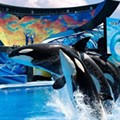 Out of all the Orlando theme parks, SeaWorld had a pretty crappy year