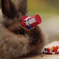 Happy Wednesday! Watch this video of a tiny hamster's July 4 BBQ