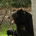 Lawsuit seeks to block return of bear hunting to Florida