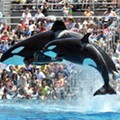 SeaWorld San Diego plans to end controversial killer whale show