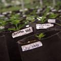 Florida approves Winter Garden nursery to grow medical marijuana