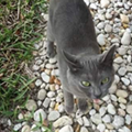 Somehow this cat made a mysterious journey from Wisconsin to Florida