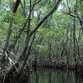 Trump says Florida Everglades restoration money is 'coming soon'