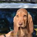 Central Florida deputy accidentally names K9 puppy after a Nazi war criminal