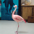 Orlando man arrested for throwing and killing a flamingo at Busch Gardens