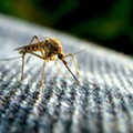 Another Zika zone identified in Miami-Dade County