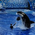 SeaWorld will open its first theme park without killer whales