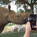 Guests at Busch Gardens Tampa Bay can feed sloths and pet rhinos in new 'Encounter' tours