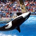 Amid pandemic, Orlando-based SeaWorld reports quarterly loss of $131 million