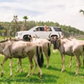 Osceola attraction Wild Florida to sell annual passes for drive-thru safari
