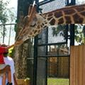 Central Florida Zoo plans $85 million renovation