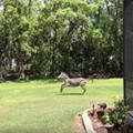 Zebra escapes, runs into Florida man's truck