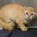 Gimme Shelter: Meet Goldie