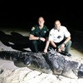 Florida authorities capture 12-foot beach gator