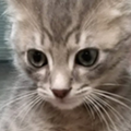 Orlando International Airport's wildlife team rescues stray kitten, names it 'Wingnut'