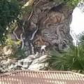 Some maniacs climbed the Tree of Life at Disney's Animal Kingdom