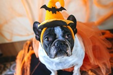 sel_dog_costume_adobestock_124050194.jpeg