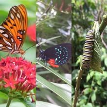 50c9bd93_ng_butterflies.jpg