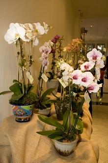 26f1bf5f_antiques_vintage_garden_show_orchids.jpg