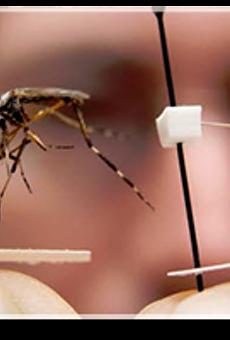 via blog.mosquitojoe.com