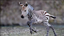 Cute baby animals, Earth Day edition