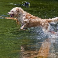 Winter Park rescinds fees for off-leash dogs at Fleet Peeples Park