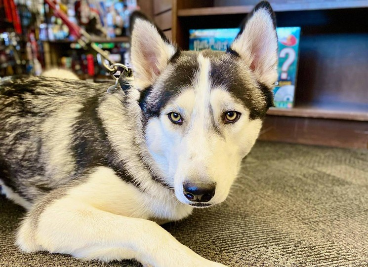 Who can resist this face? - BOOKMANS