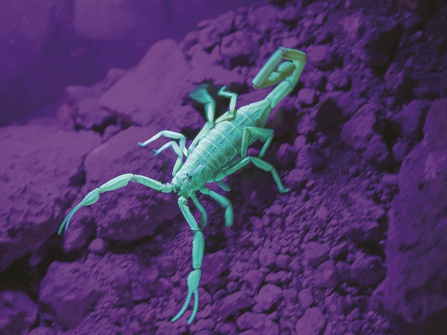Strange creatures and beautiful sights can be seen at the Desert Botanical Garden after dark.