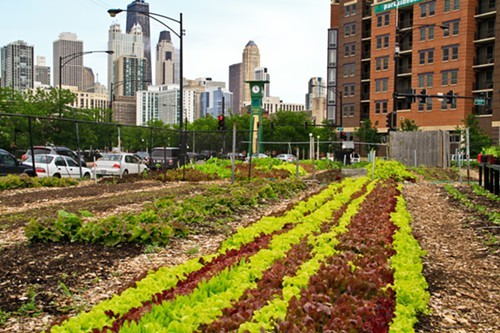 A urban garden featured in Growing Cities
