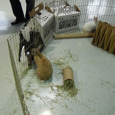 Animal Friends' Telethon
