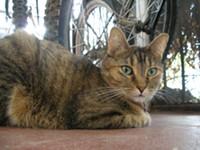 carla_s_brown_cat_jpg_eae28f2d-original.jpg