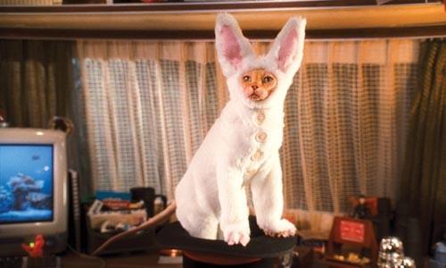 30_cats_dogs.jpg