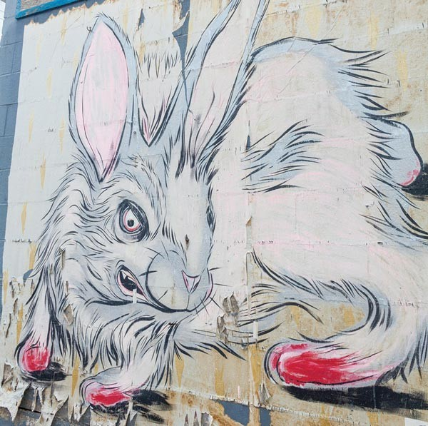 Feral Bunny Wall Art
